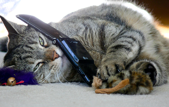 cat laying on carpet with a flip mobile phone