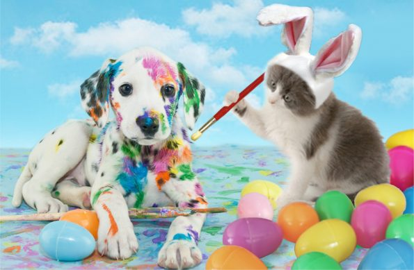 Cat wearing a rabbit ear painting paint on a dog surrounded by Easter eggs
